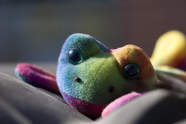 dashboard frog