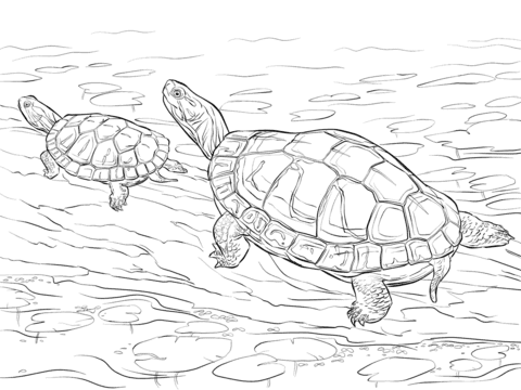 two painted turtles coloring page  free printable coloring pages