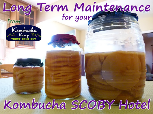 SCOBY Hotel Maintenance