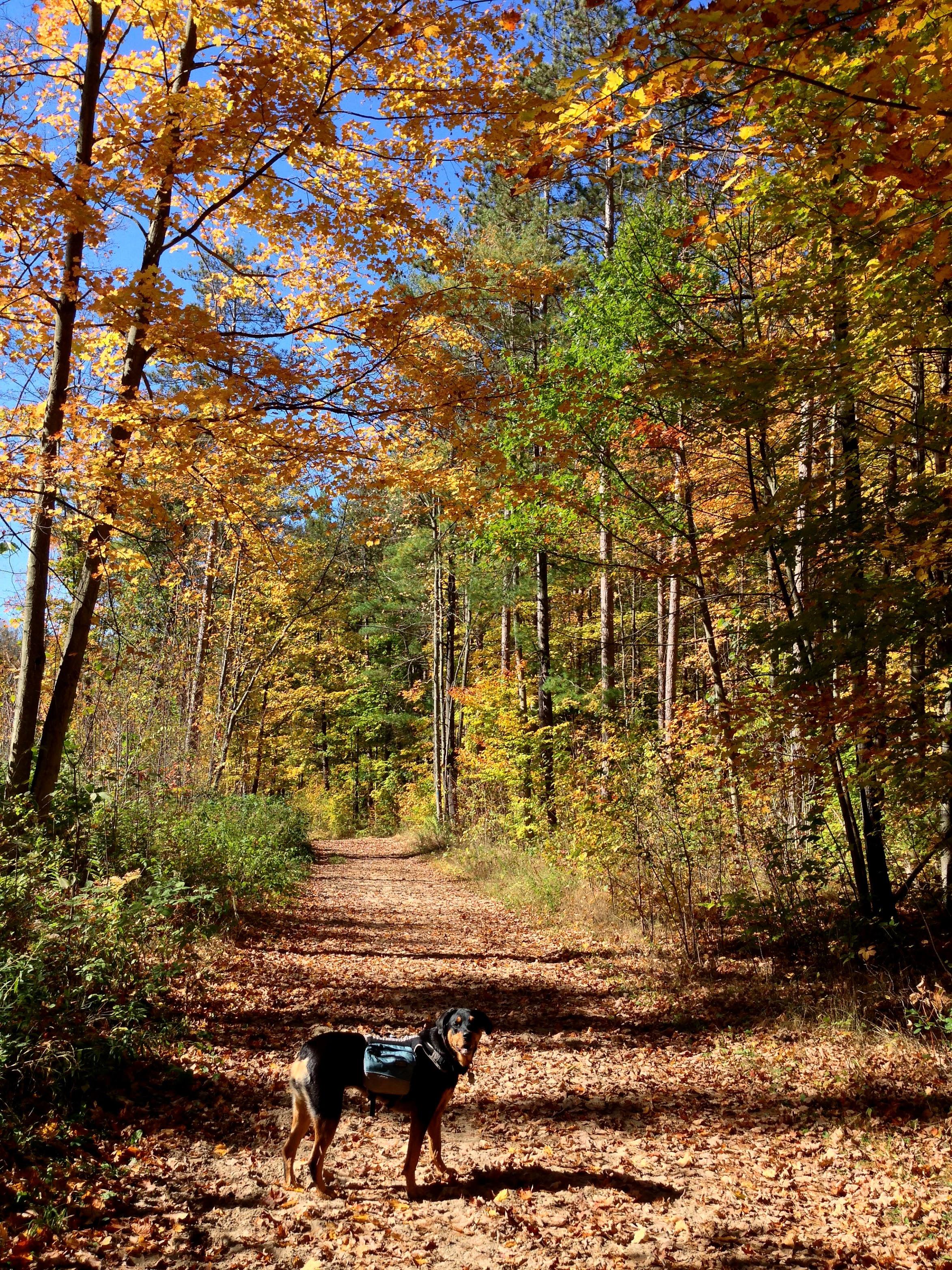Vivian Forest - Oct 9