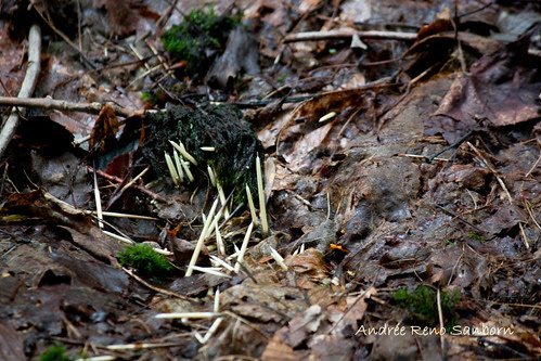 Porcupine Quills at the bottom of the cliff-1.jpg