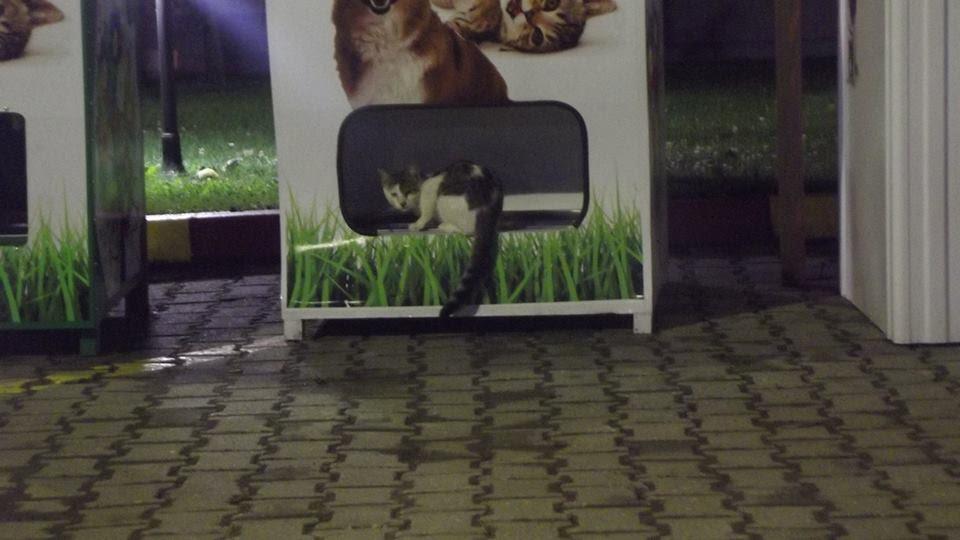 Não é só para cachorro; os gatos também aproveitam a oportunidade