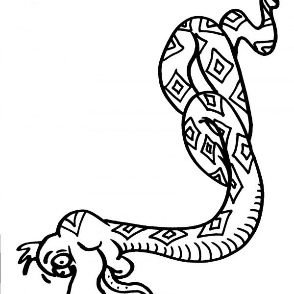 Serpente Da Coloraretopo Da Coloraretopino Da Colorare