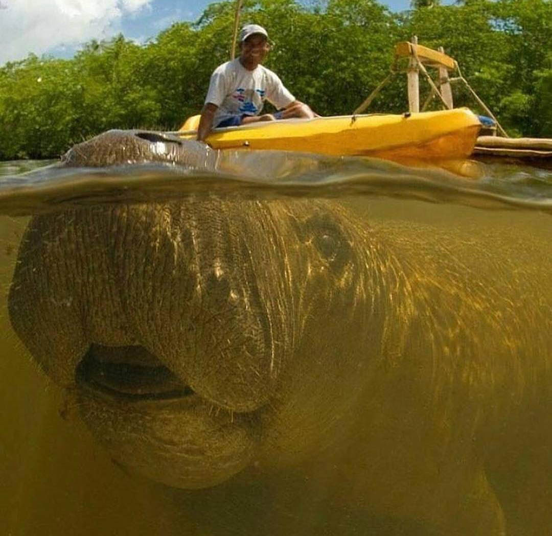 16 - Nonchalant Compilation of 31 Remarkable Images