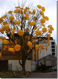 Umbrella Bloom