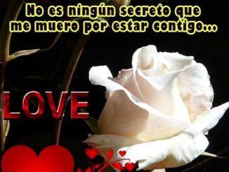 Frases De Rosas Para Descargar Rosas De Amor
