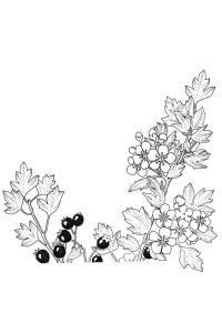 Mirtilli Da Colorare Frutta Disegni Da Colorare Per Bambini