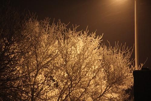 snowy tree night