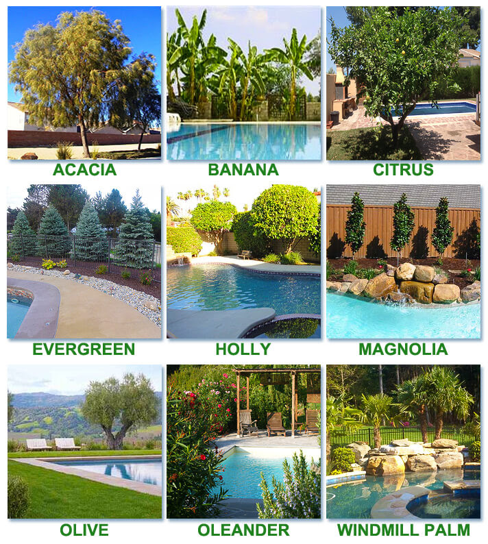 BEST TREES TO PLANT AROUND A POOL