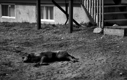 Antonio Otter BW Film