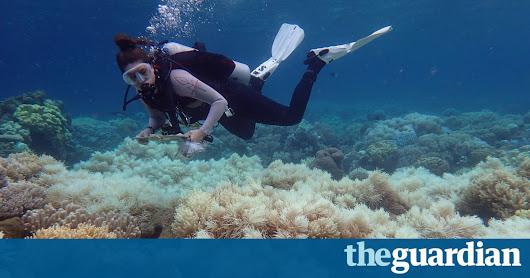 Great Barrier Reef 2050 plan no longer achievable due to climate change, experts say | Environment | The Guardian