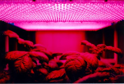The Right Way (And Wrong Way) To Garden Indoors With Grow Lights
