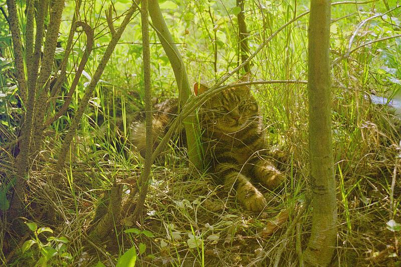 File:Cat blending in.jpg