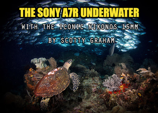 The Sony A7R Underwater with the Iconic Nikonos 15mm lens By Scotty Graham
