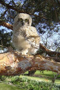 Owlie Scowlie