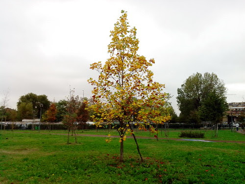Giallo ocra di fine ottobre! by Ylbert Durishti