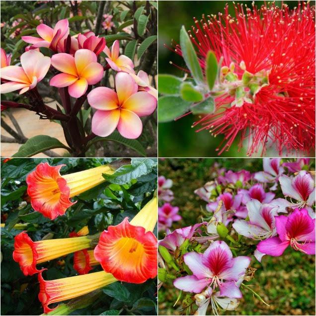 9 Plantas exóticas para enamorarse