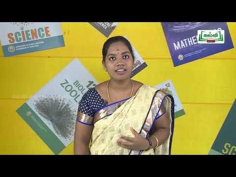 கலைத்தொழில் பழகு Std 11 TM Economics செலவும் வருவாயும் Kalvi TV
