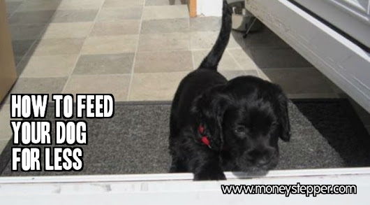 How to Feed Your Dog for Less - Tips to Save Money