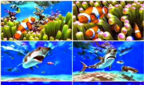 Download Download Wallpaper Aquarium Bergerak Untuk Windows 7 Gallery