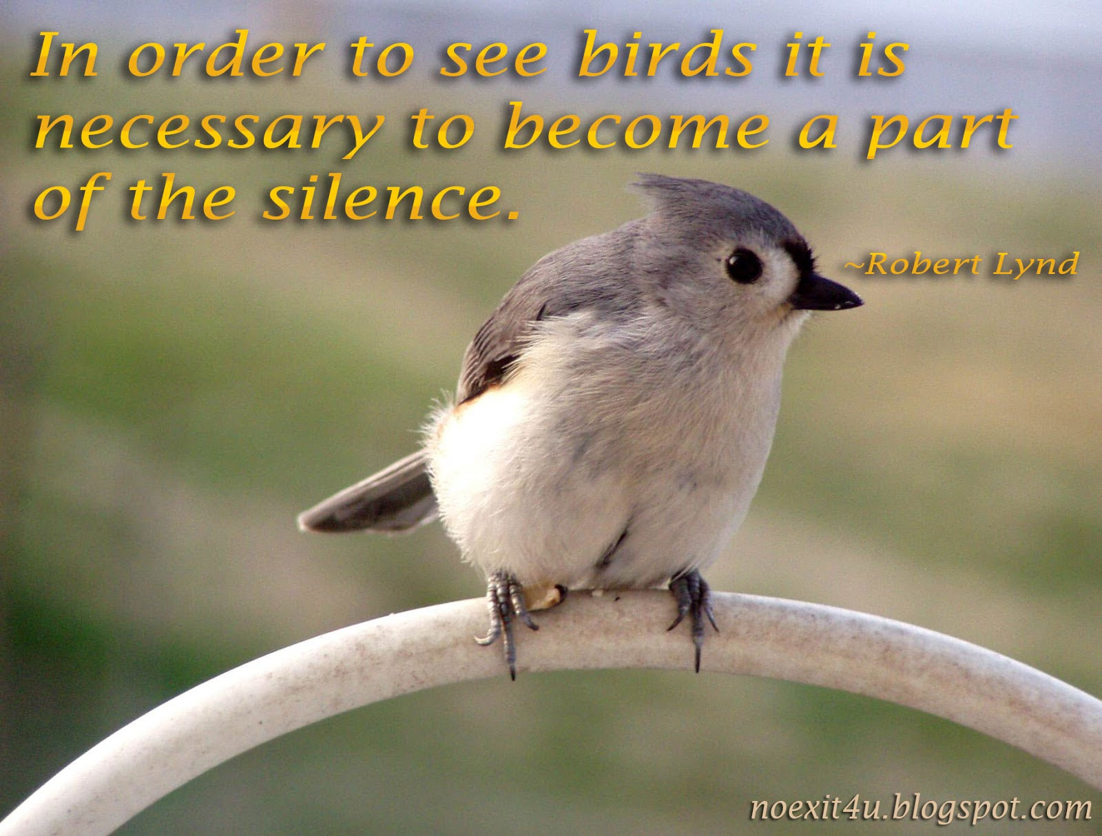 Quotes About Sparrow Birds 13 Quotes