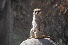 Zoo Animals (34)