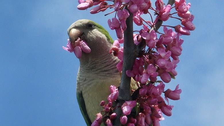 πράσινος παπαγάλος παπαγάλος Παπαγάλοι