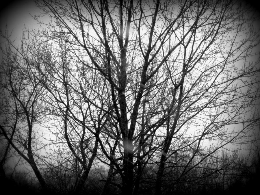 Blank Life by xBelisaria on DeviantArt