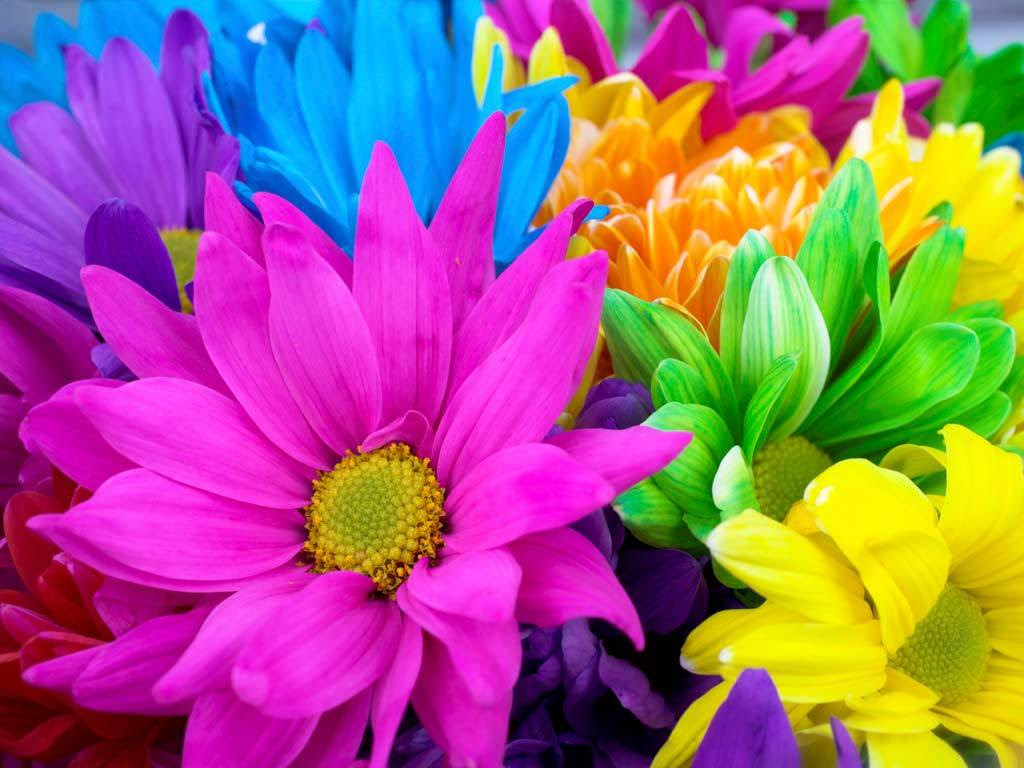 http://25.media.tumblr.com/tumblr_lld3bblpga1qhvng9o1_1280.jpg