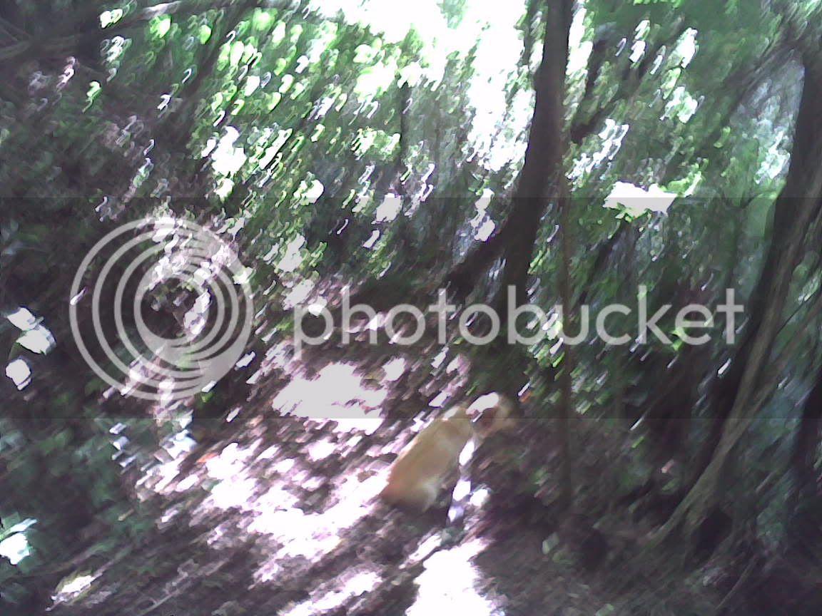 Monet's Labrador