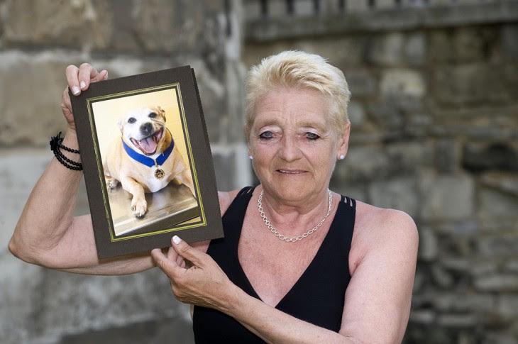 oi el perro que salvo a su dueña de ser asesinada con una pistola