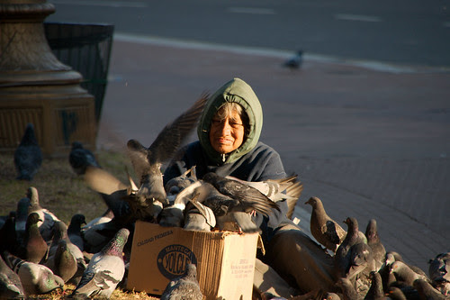 Old woman feeding the pigeons