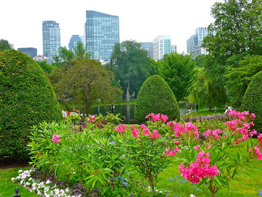 Blossom Your Boston Vacation at the Legendary Public Garden | Visiting New England On A Budget