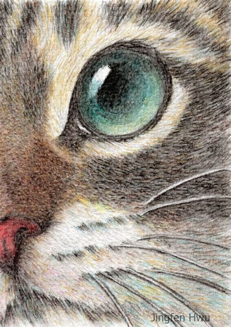 great ideas  cat face drawing  pinterest cat