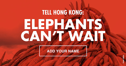 Tell Hong Kong: Elephants can't wait
