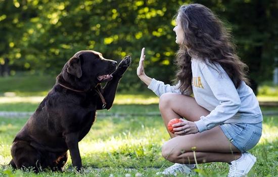 Cómo entrenar a un perro