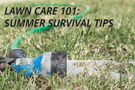 Lawn Survival Tips for the Summer Heat | Georgia Lawn Care