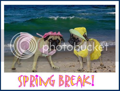 Spring Break Babes