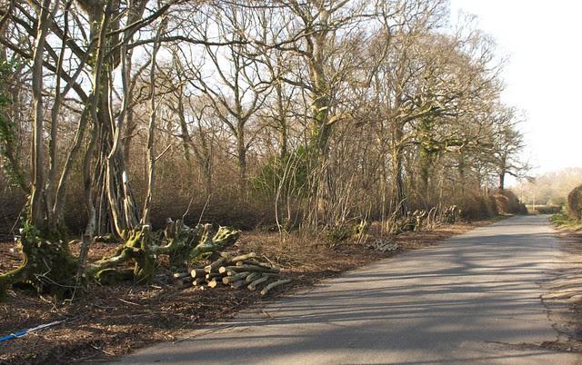DSC_8171 roadside tree cutting