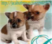Housewife Blues and Chihuahua Stories