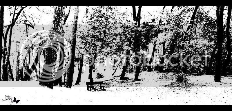 Parc pins Touquet