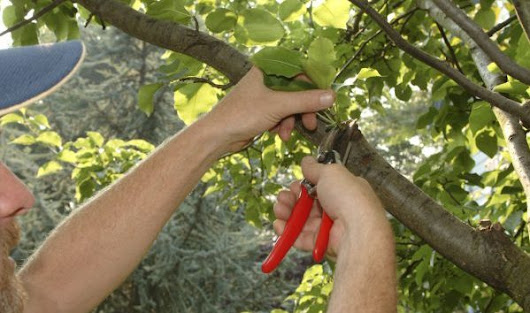 Important Information About Tree Pruning | Tree Service in Indianapolis