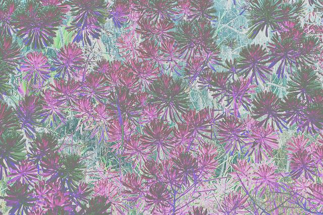 purplegreens
