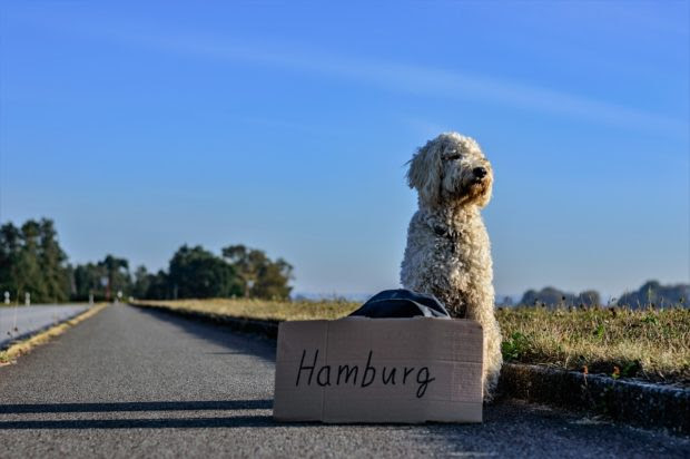 Top 4 Tips For Traveling With Pets