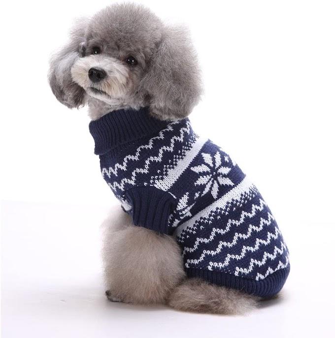 Abrigos y chubasqueros para perros: ¿Cuándo sí y cuándo no?