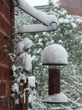 Snow on bird feeder in Sean's garden