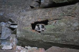 Peeping skull