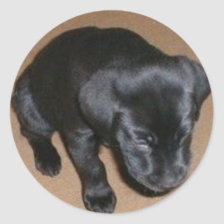 Tired Labrador Puppy Round Stickers