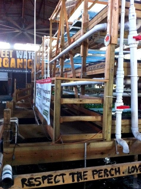 Another aquaponics system that shows a pool of perch below planks of