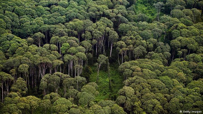 Regenwald Asien Indonesien